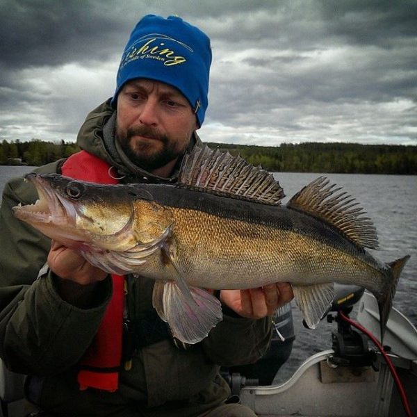 Benny Backeby, fims guide at Lillbo with a nice Zander from the lake at Lillbo