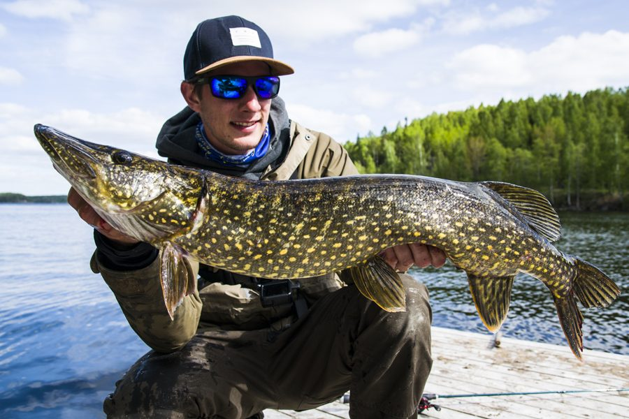 Willem Romeijn, sportfishing guest from Holland. Pike catched in Kyrksjön at Bagarstugan
